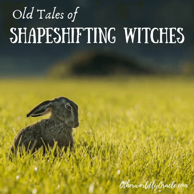 Old Tales of Shapeshifting Witches from Britain & the U.S.