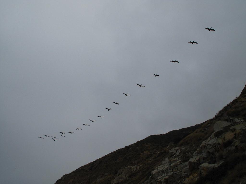 Bird flight patterns should be read: v-shaped, straight lines, etc.
