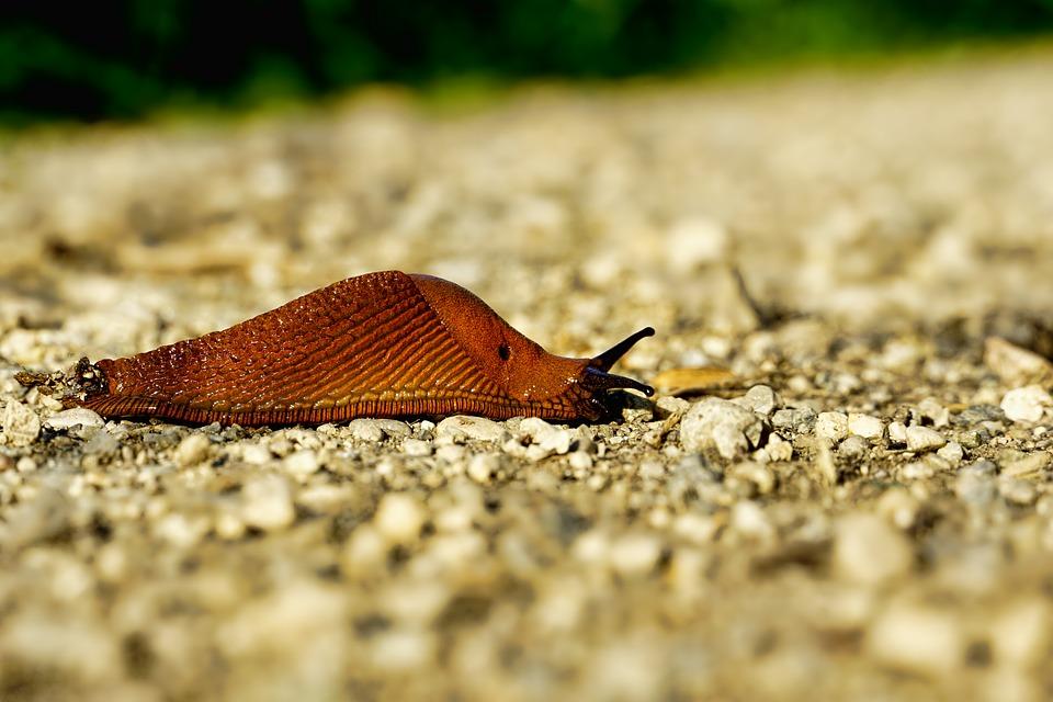 Slug spirit animal teaches us how to be strong and steady.