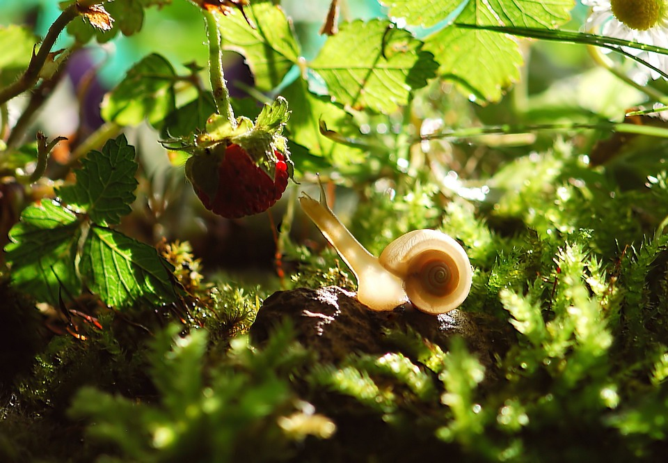 Snail symbolism and folklore