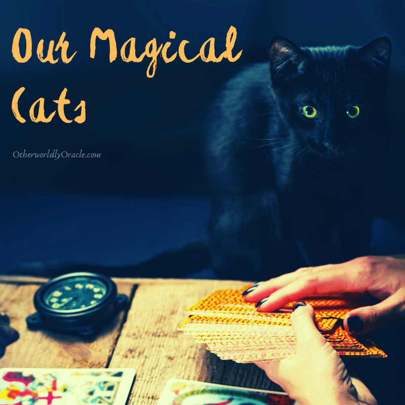 Magical Cats: Ancient Worship, Folklore, Cat Spells and More!