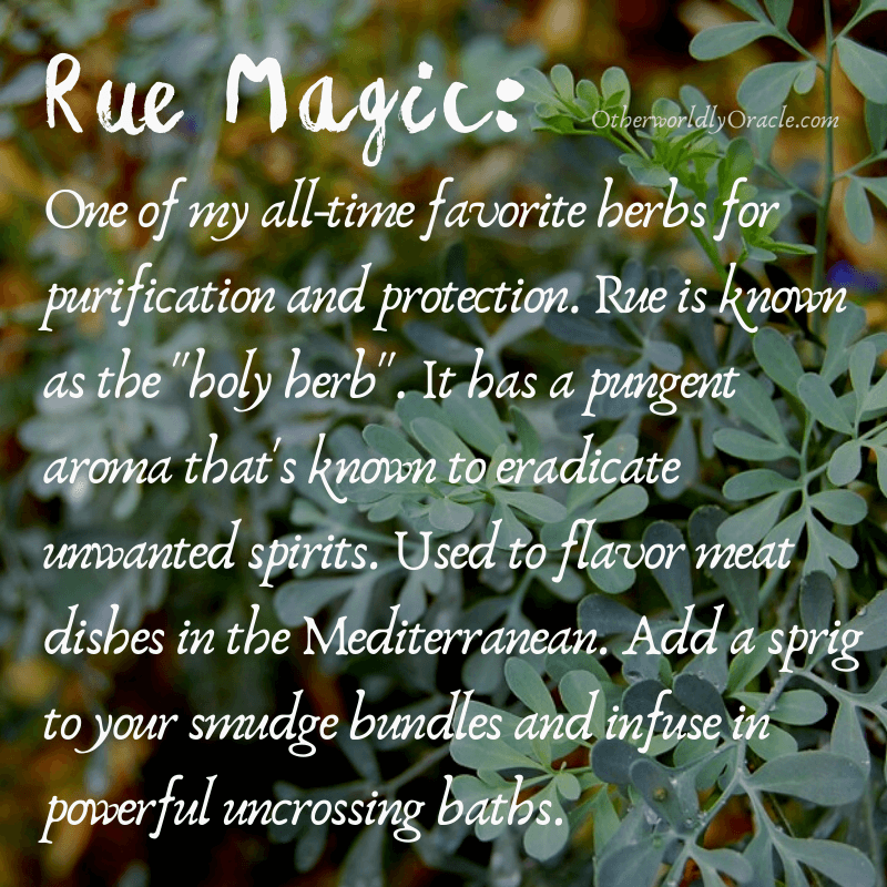 Rue is a holy herb - it banishes evil and protects against intrusions.