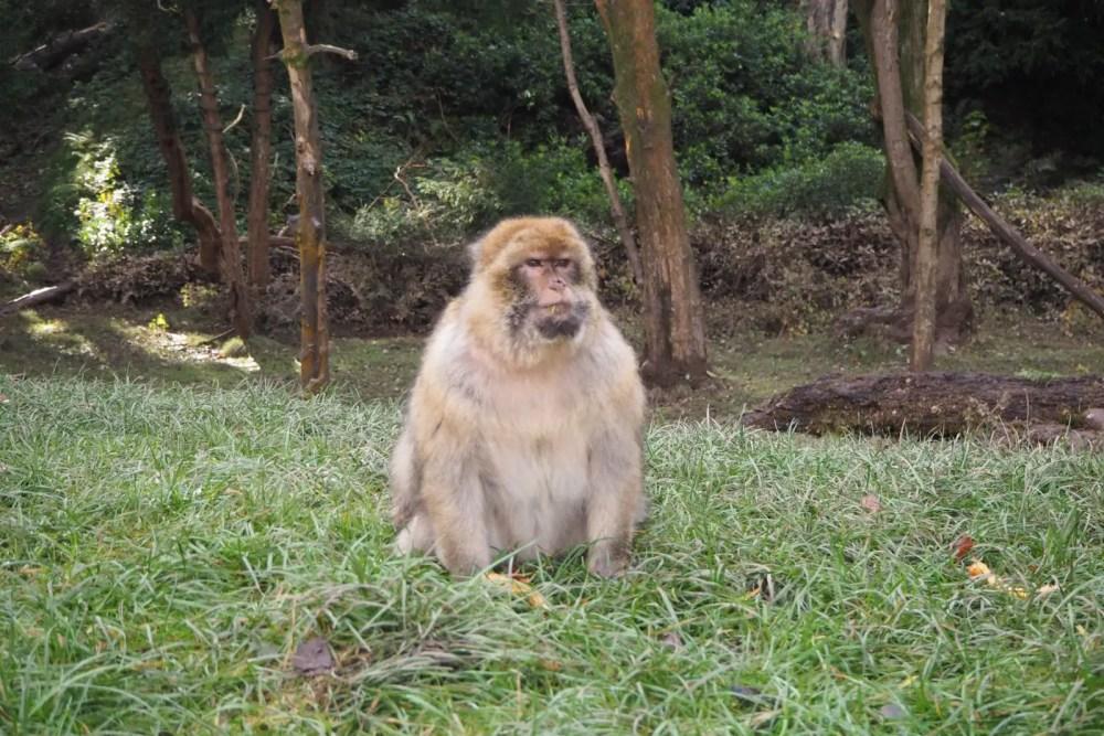 Tips for visiting Trentham Monkey Forest