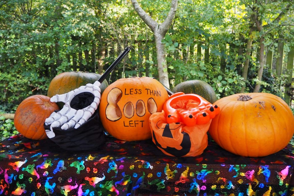 Halloween event at Trentham Monkey Forest Stoke