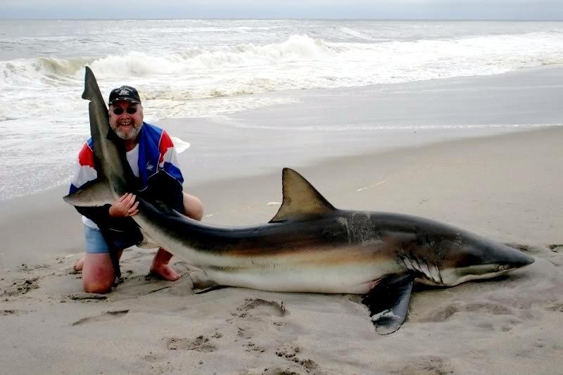 bronze whaler shark quot ocean treasures quot memorial library