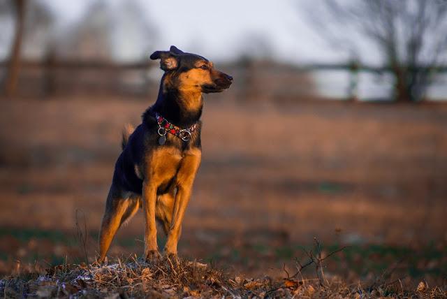 sylwester z psem dzicz głusza osjaków otojanka