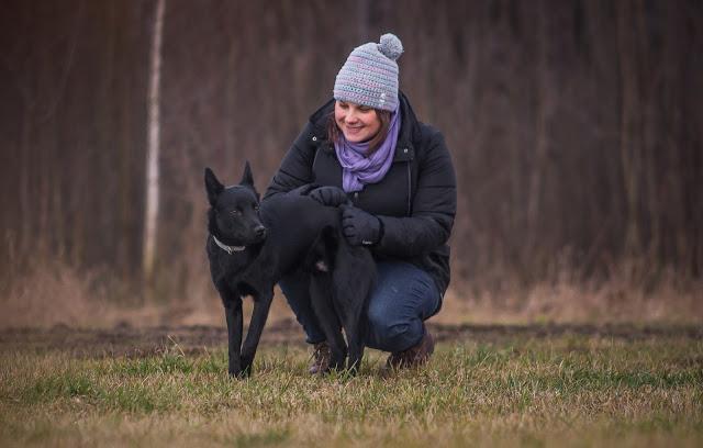 jarvis kelpie owczarek australijski szczeniak czarny pies otojanka