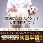 毎日散歩 獣医師が認めたワンちゃん用の関節サプリメント!