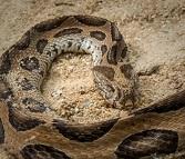 サプリにも配合されている蛇