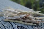 粉にする前の白インゲン豆