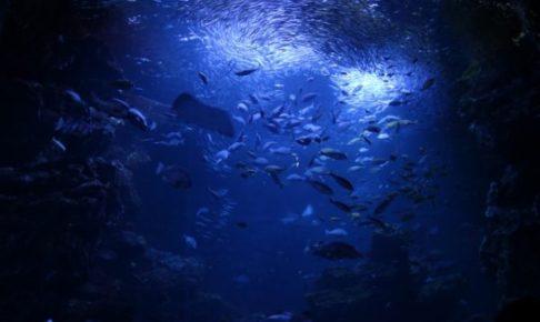 仄暗い海の底からのイメージ