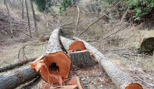 木を伐採して森林問題を考えてみた