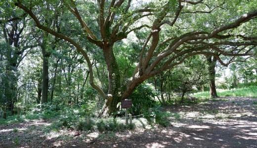 ウォーキングコース 自然の中をゆったり散策できる かしの木山自然公園