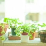 リアルな人工観葉植物でオシャレな癒やし空間づくりがおすすめ!!