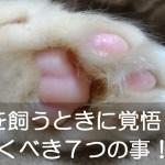 猫を飼うときに覚悟しておくべき7つの事!!世話の仕方は?かかる費用は?