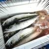 ダイソーのジグロックが有能過ぎる!人生2回目の釣りでサバを爆釣した話
