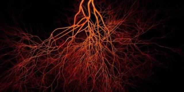 kemik damar