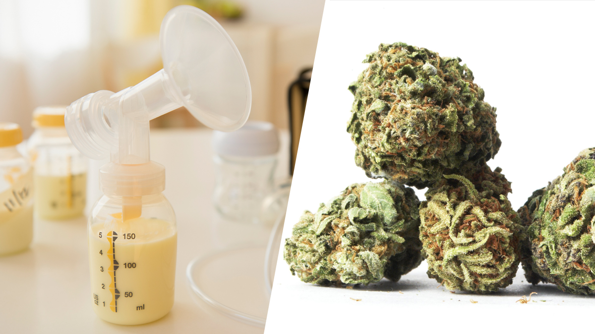 A New Study Shows THC Stays in Breast Milk for 6 Weeks