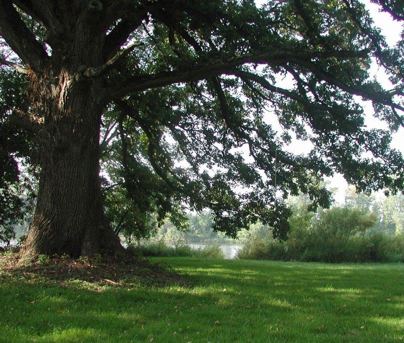 bur oak landing