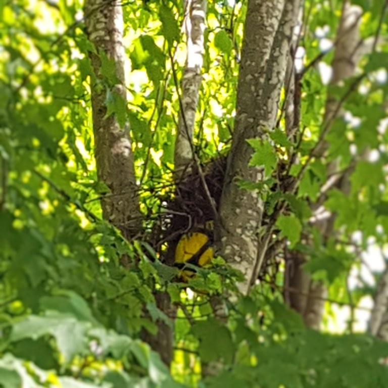Soccer Ball Birds Nest
