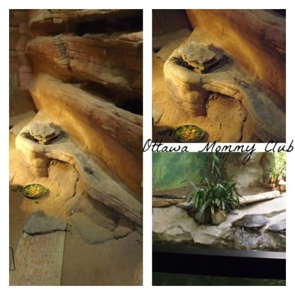 Rosamond Gifford Zoo ~ Lizards