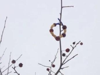 Pipe Cleaner Bird Feeder