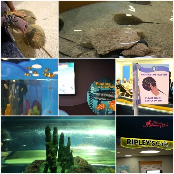 Riples's Aquarium-Discovery Centre