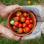 What to Plant in a Summer Vegetable Garden