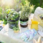5 Gardening Tips For Avoiding Back Pain