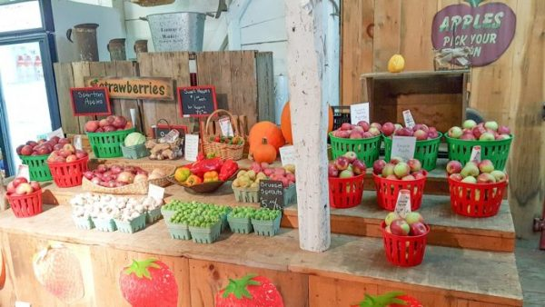 Getting Up Close and Personal with Food with Farm and Food Care Ontario