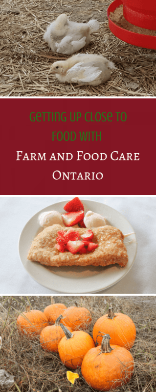 Get Up Close to Food with Farm and Food Care Ontario