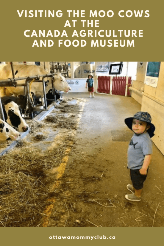 Visiting the Moo Cows at the Canada Agriculture and Food Museum