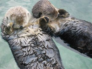 otters-holding-hands
