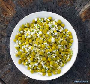bowl full of chamomile flowers