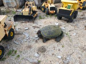 snapping turtle and tonka toy construction trucks