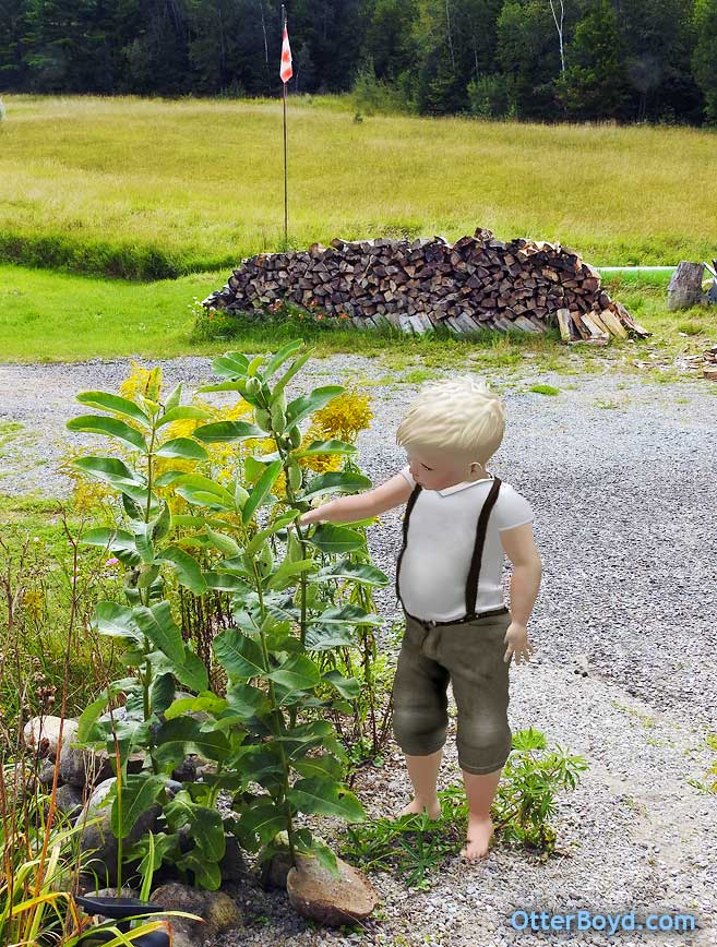 Otter Boyd boy with milkweed plants