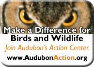 Audubon Action Button