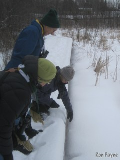 Barry King points out a likely Mink trail