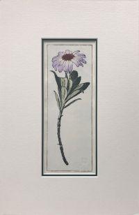 Olearia Semidentata woodblock print
