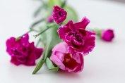 23 Blomsterfröjd