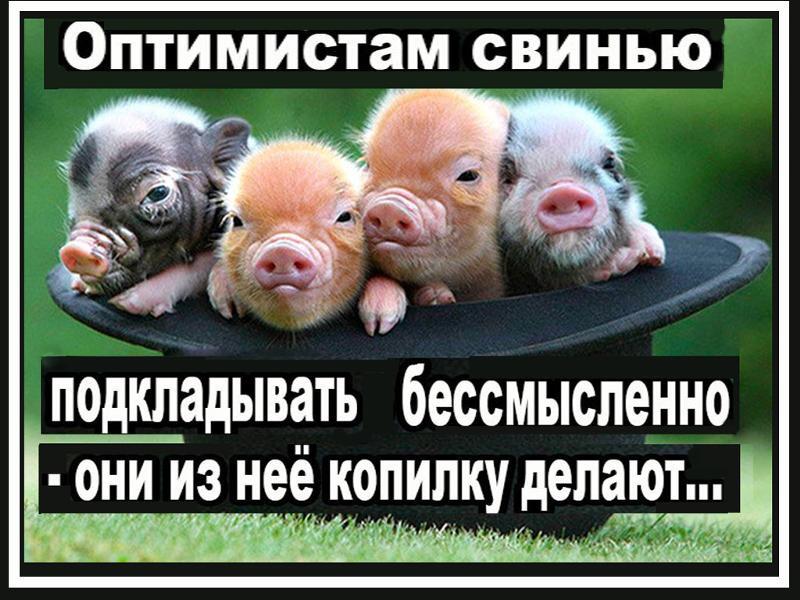 Подложить свинью - происхождение фразы