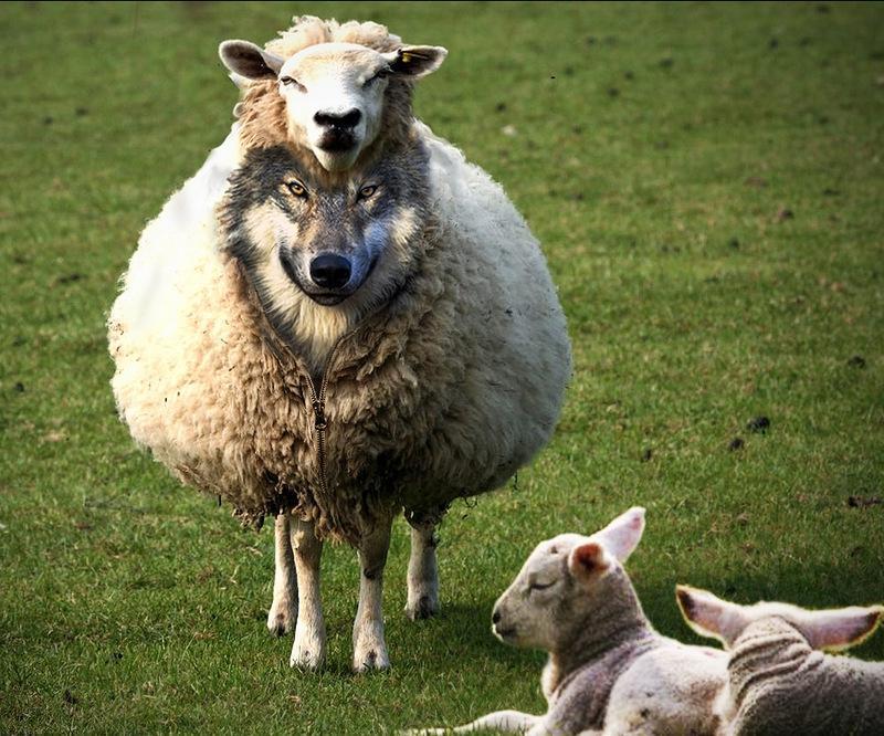 Кто такой волк в овечьей шкуре и как таких вычислить