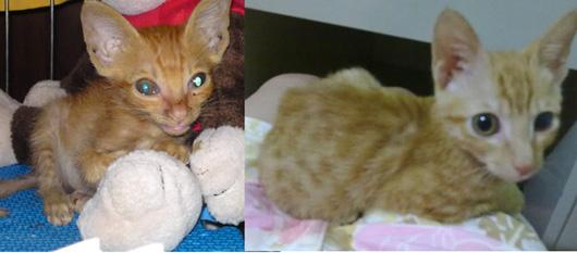 Рождённый на улице, этот котёнок еле дожил до того, как пришла помошь.