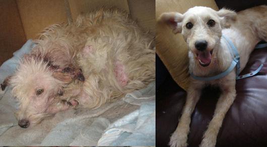 Этот щенок страдал от чесотки и других травм. Взгляните на него сейчас - он просто счастлив!