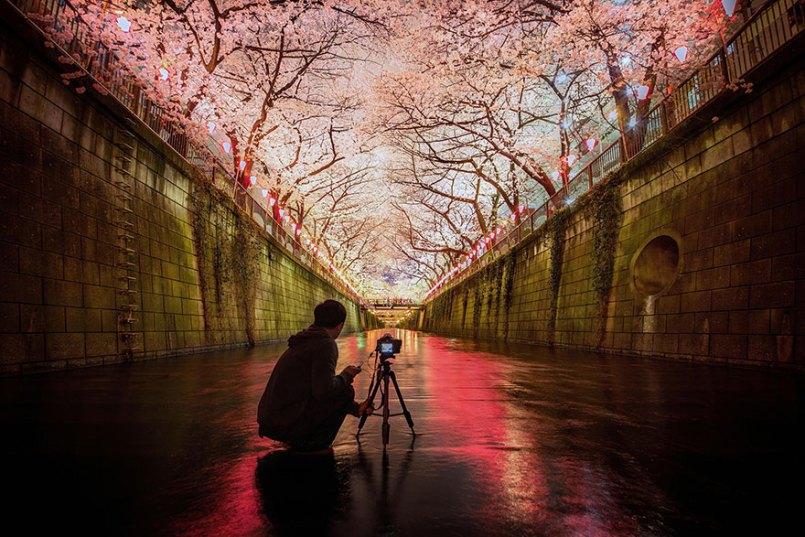 фотограф и цветущая сакура