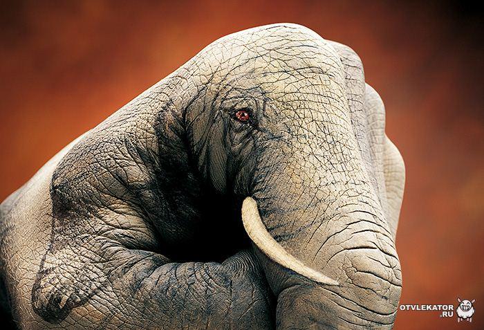 боди-арт слон