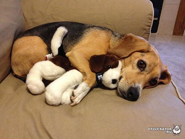 собака обнимает игрушечную собаку