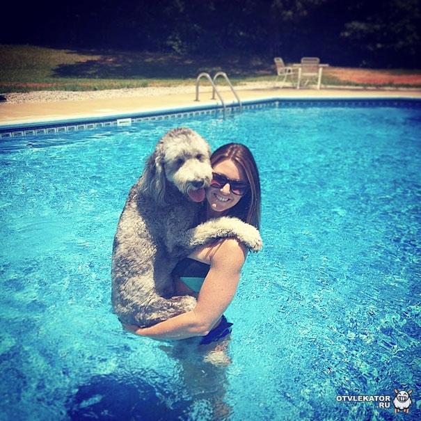 девушка обнимает собаку в бассейне