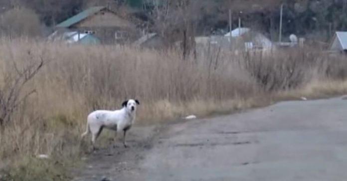 В Петропавловске появился свой Хатико