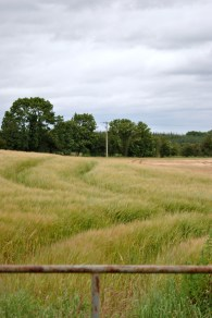 Wheat and gate... symmetrical lines...